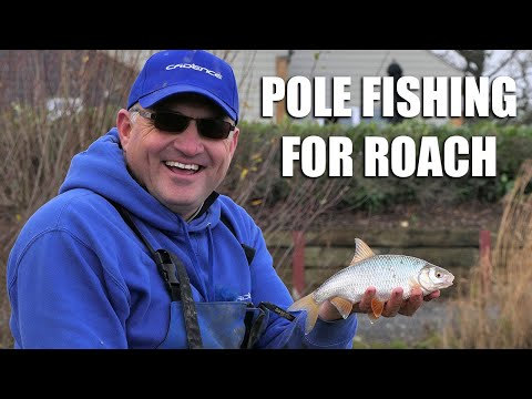 Pole Fishing For Roach At Chester Lakes