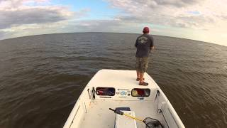 Cedar key fishing charter for Cedar key fl fishing