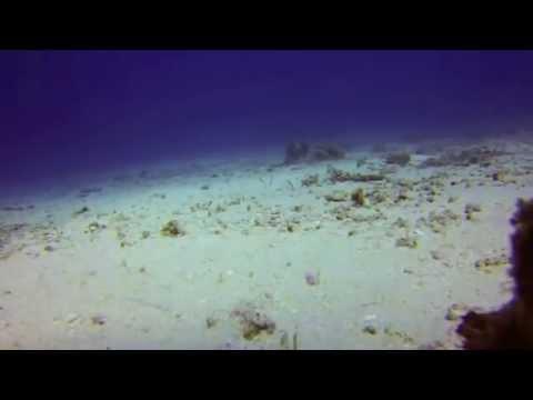 Garden Eels of Rainbow Reef, Fiji with Taveuni Dive