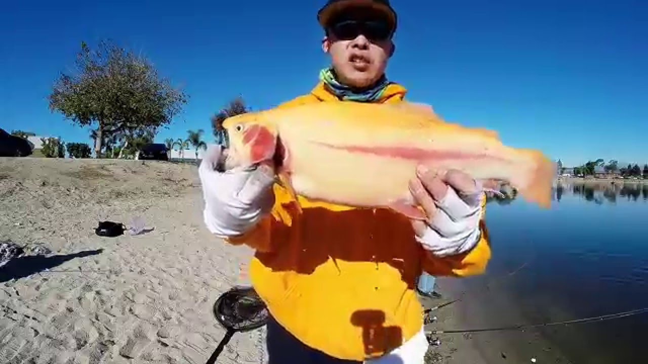 Santa ana river lakes nice lightning trout on the for The fishing caddy