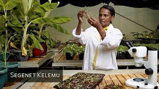Segenet Kelemu, une scientifique spécialiste des plantes fourragères