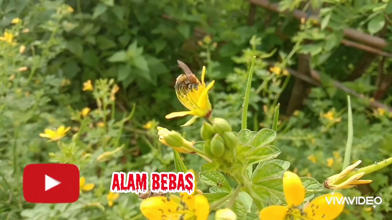 Kumbang dan bunga - YouTube