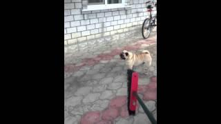 Видео-урок как выгнать собаку со двора