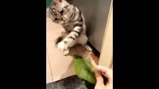年廿八幫怪獸洗邋遢隻傻貓以為有野玩.