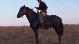 Кабардинский жеребец аул  Урупский успенский р-н