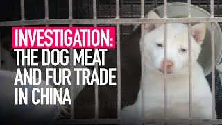 The cruel dog meat and fur trade in China - Animal Equality investigation