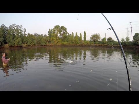 Duwamish River Pink Salmon Fishing 2015