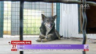 Чи потрібно в Україні реєструвати домашніх тварин?
