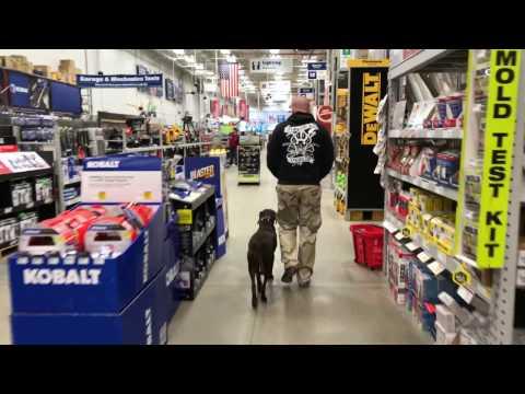 "Chesapeake Bay Retriever Lab Mix ""Roxy"" l Incredible Transformation l Hampton Roads Dog Trainers"