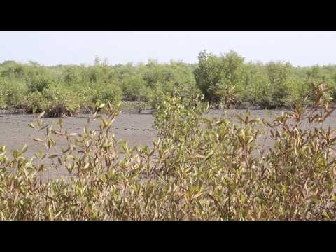 Guinée Bissau Paysages guinéens / Guinea Bissau Guinean Landscapes