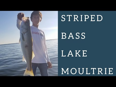 Sight Casting For Striped Bass On Lake Moultrie
