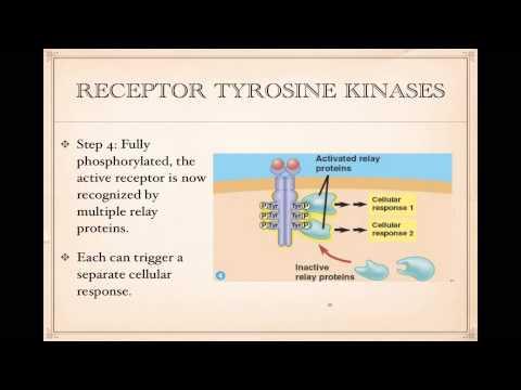 Cell Signaling- Tyrosine Kinase receptors