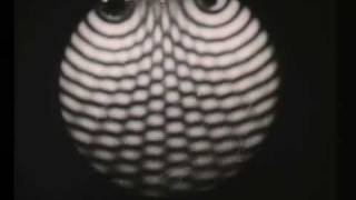 Wave Motion Interference