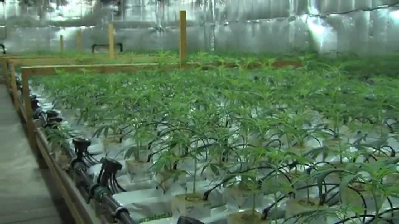 hanf indoor plantage in l neburg cannabis indoor grow youtube. Black Bedroom Furniture Sets. Home Design Ideas