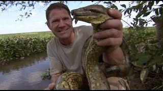 Steve Wrestles with a Green Anaconda | Deadly 60 | BBC Earth