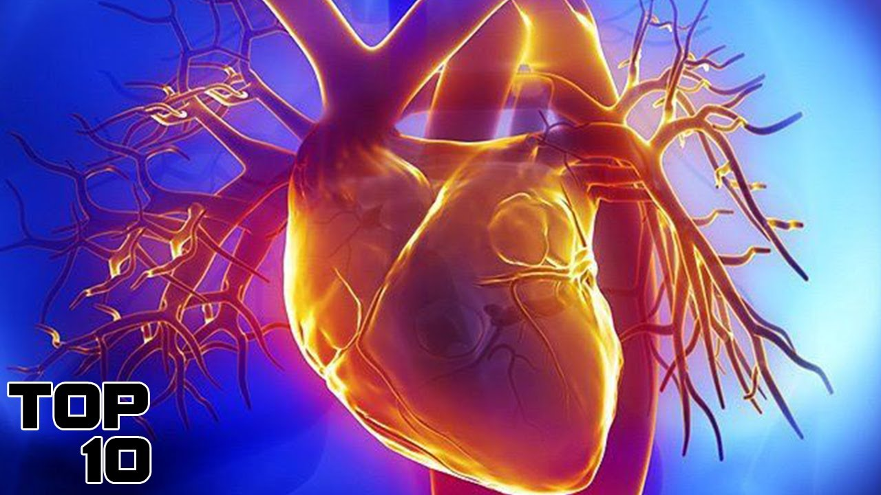 top 10 fascinating facts about the human heart - youtube, Muscles