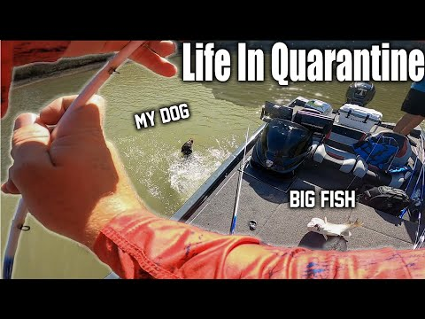 Life in Quarantine: Episode 1 - Jumping in head first