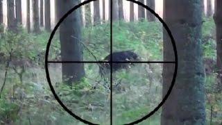 WILD BOAR HUNTING. Охота на кабана с прицелом