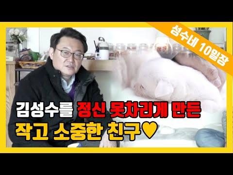 [성수네 10일장] #누어랑 김성수를 정신 못차리게 만든 작고 소중한 친구를 소개합니다!