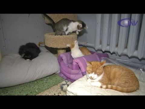 В Калуге раздают бездомных кошек