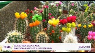 видео Кактусы, суккуленты купить Украине