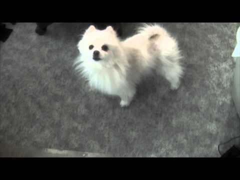 heartbreaking dog monologue