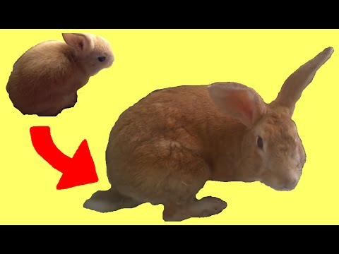 Rabbit Growing 25 Years (Time Lapse) - YouTube