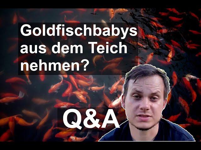 Wann sollte man Goldfischbabys aus dem Teich nehmen? Q&A