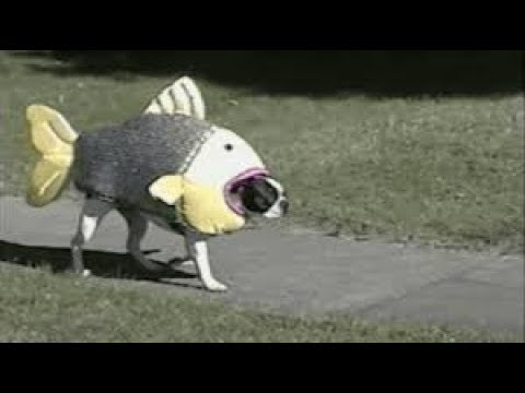 DOGS DRESSED UP IN COSTUMES - Dogs in Costumes Funny Compilation