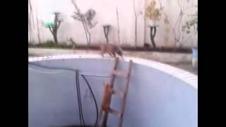 Как купать кошку ? БОИ кошек ! Спаринги кошек !Смех 228 ! Ржака вобще !!!