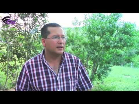Veracruz; primer productor nacional de Gallos de combate