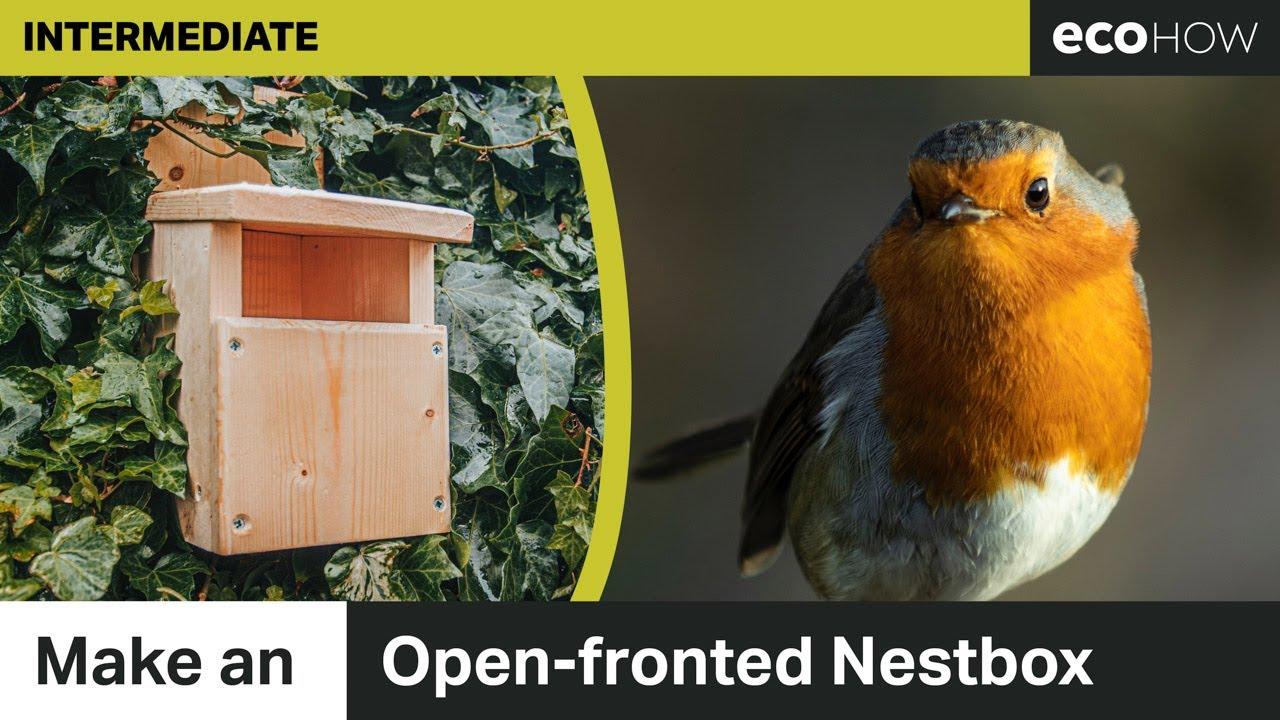 Make an open-fronted bird box