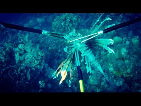 Lionfish Hunting In Curacao 2017