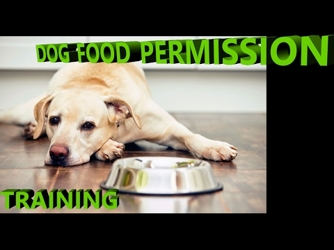 Dog Waiting For Food Training In English / Hindi / Urdu 2017 | Smart dogs training