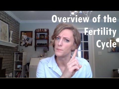 Overview of the Fertility Cycle
