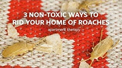 Getting Rid of Cockroaches the All Natural Way | Apartment Therpy