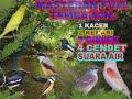 Masteran Burung Kacer Kenari Ciblek Cendet Dan Suara Air Terjun Terbaik  Mp3 - Mp4 Download