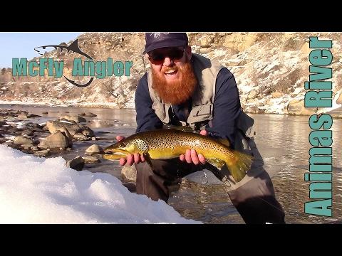 Huge WILD BROWN Trout On The Animas River, Durango Colorado - Mcfly Angler Episode 6