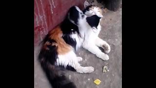 кошка и котята Люберцы1)(Друзья,срочно нужна передержка,а лучше ручки для кошки в Люберцах ! Раньше кошка жила ,горя не знала в подъез..., 2013-08-28T16:48:17.000Z)