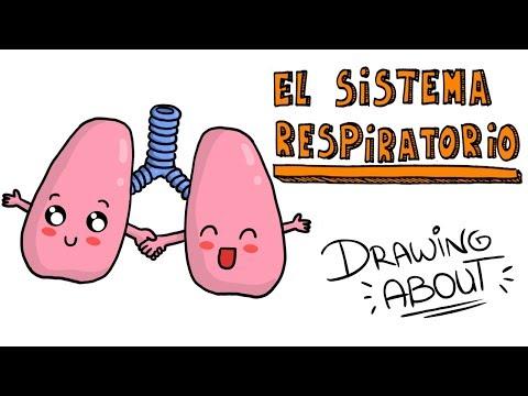 El SISTEMA RESPIRATORIO | Drawing About con @GlóbuloAzul