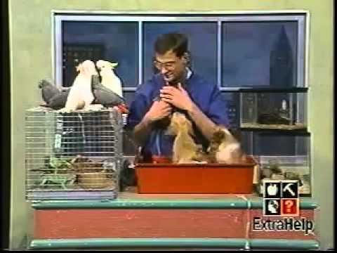 World's Worst Petkeeper on TV