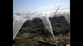 Doludan Koruma Sistemi - Yıkılan Bahçe Örneği (dolu filesi, dolu ağı, telli terbiye, dolu tülü)