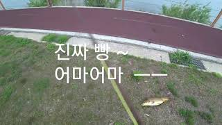 fly fishing for carp And Catch carp with fly fishing (잉어산란 팁)