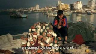 Dispatches - Children of Gaza | A MustWatch Documentary Part 5 of 5