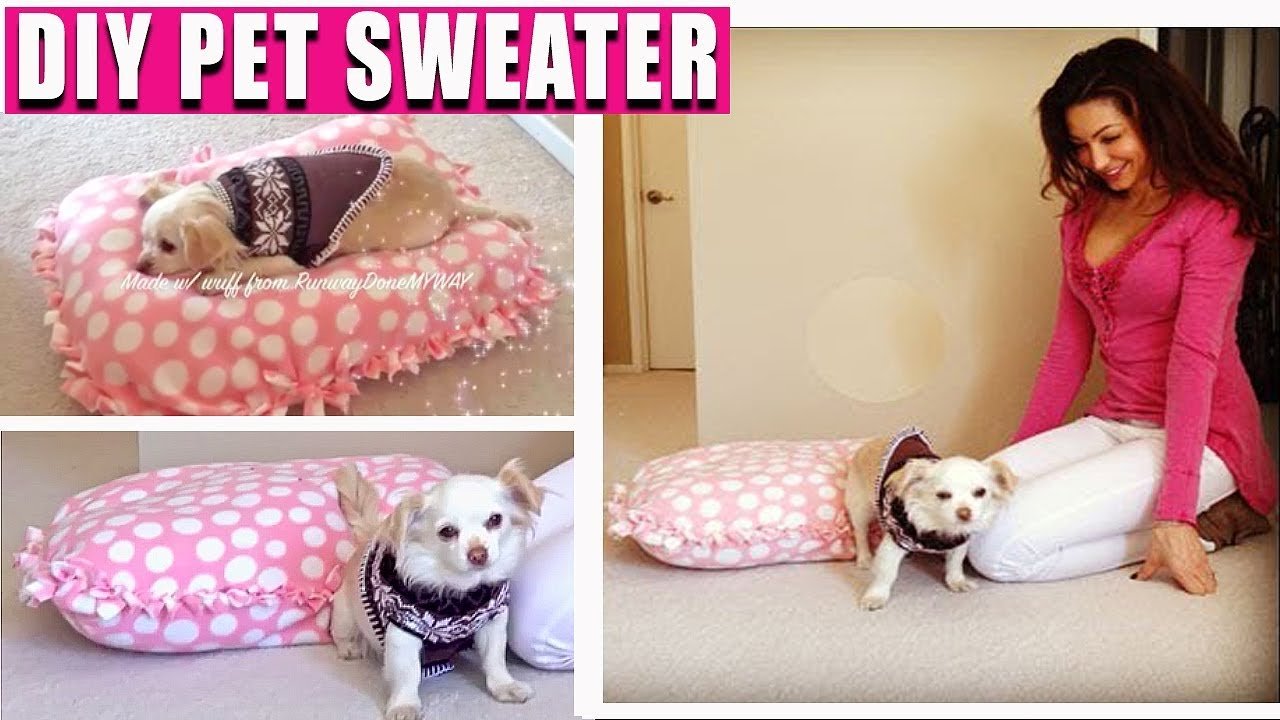 Diy Cheap Pet Sweater Diy Pet Bed Easy No Sewing Youtube