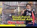Sujud Sujud Nembak Asik Murai Batu Mpu Suro Raih Double Winner  Mp3 - Mp4 Download