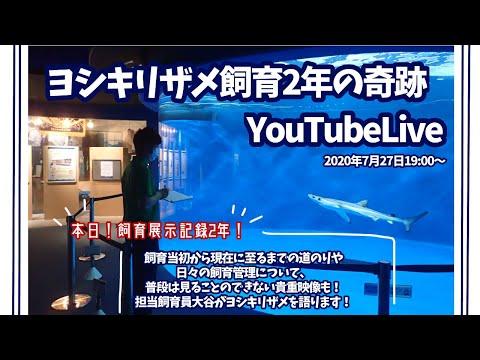 ヨシキリザメ飼育2年の軌跡【YouTube LIVE配信】