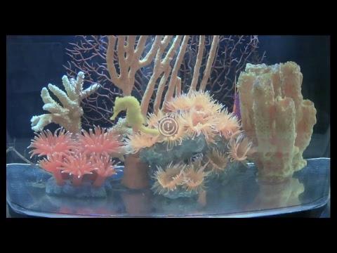 Clearwater Marine Aquarium - Live Cheeto Cam Stream