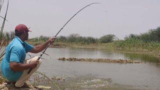 Fish hunting  Fishing  Big rohu fish catch