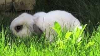 BudgetBunny: Treating Mites In Rabbits